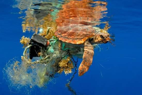 Siemenshledácesty,jakvyčistitoceányodplastovéhoodpadu